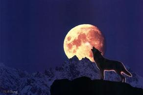 Dog and Moon